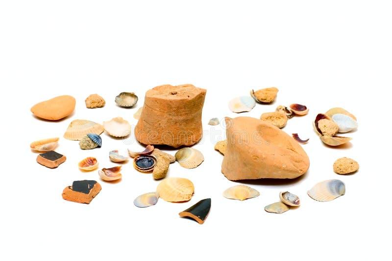 海扇壳海洋 免版税图库摄影