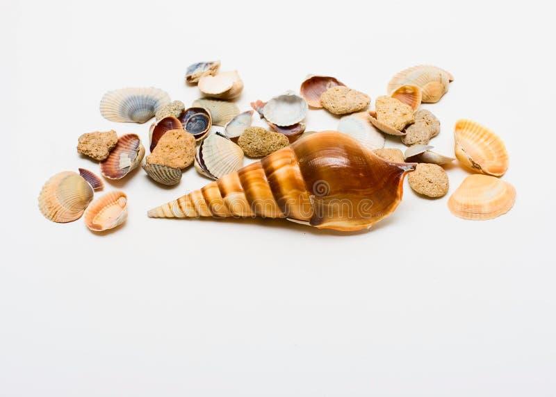 海扇壳灰色海洋 免版税图库摄影