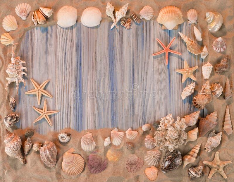 从海扇壳的框架 库存照片
