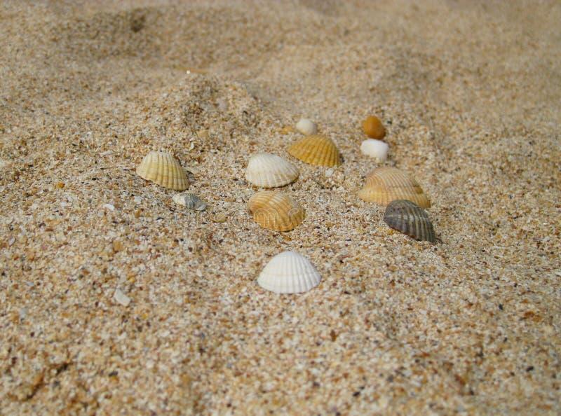 海扇壳 海娱乐在度假 库存照片