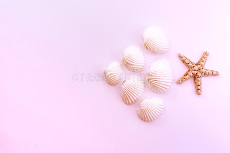 海星和贝壳在桃红色背景 平的被放置的海滩精华 顶视图秀丽照片 免版税库存照片