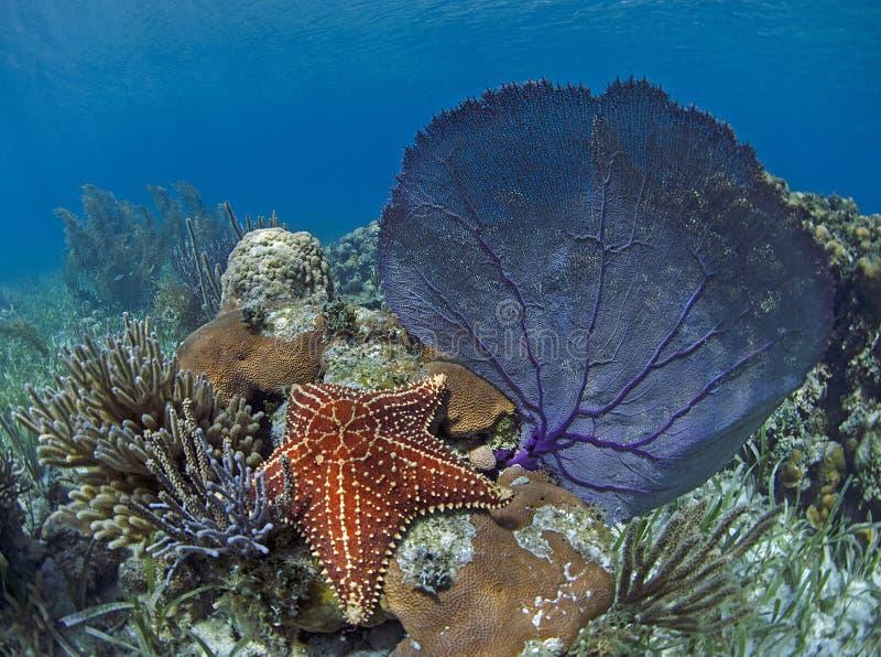 海星和水下的海底扇 库存照片