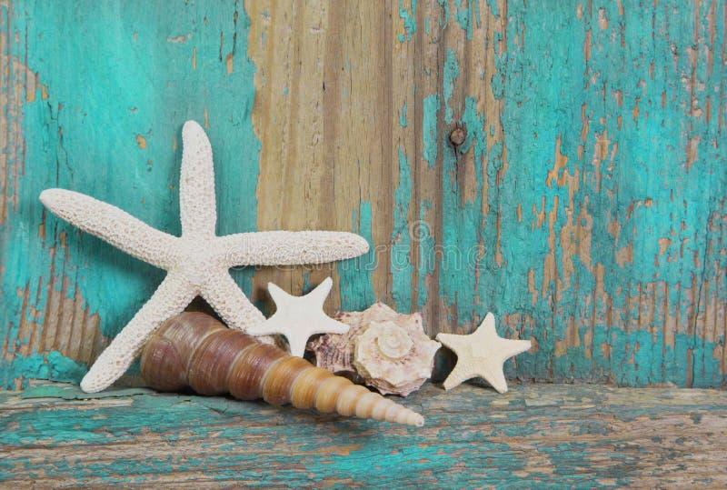 海星和贝壳在破旧的木背景在绿松石 免版税库存照片