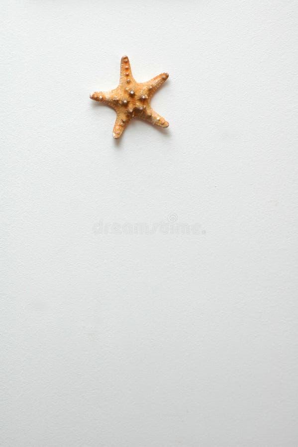 海星墙壁 免版税库存照片