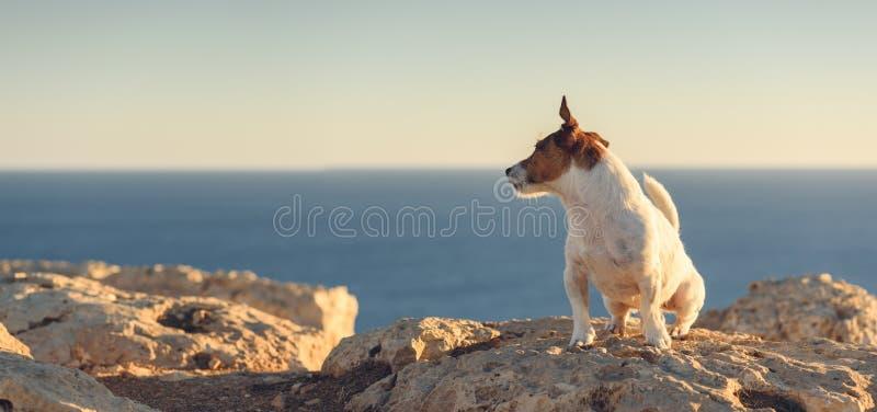 海景与狗的全景视图坐峭壁 免版税图库摄影