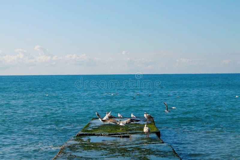 海景 晴朗的日 黑海 免版税库存图片