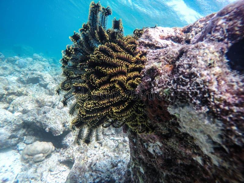 海植物 库存照片