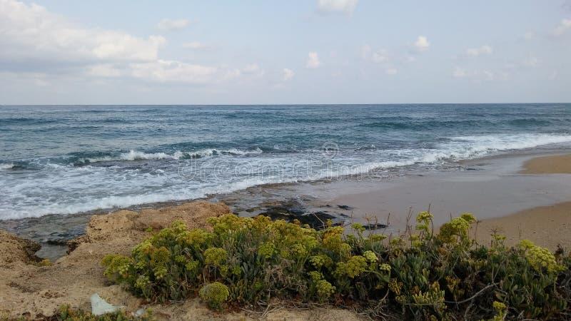 海母狗在纳哈里亚,以色列 免版税库存照片