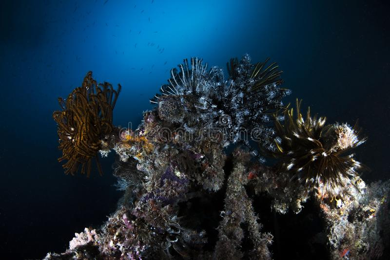 海洋在深蓝背景的生物水下的场面 库存照片
