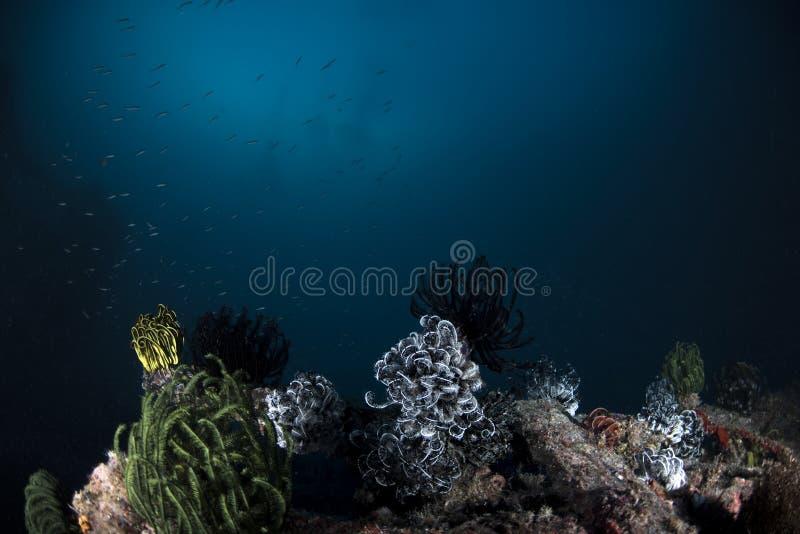 海洋在深蓝背景的生物水下的场面 免版税库存图片