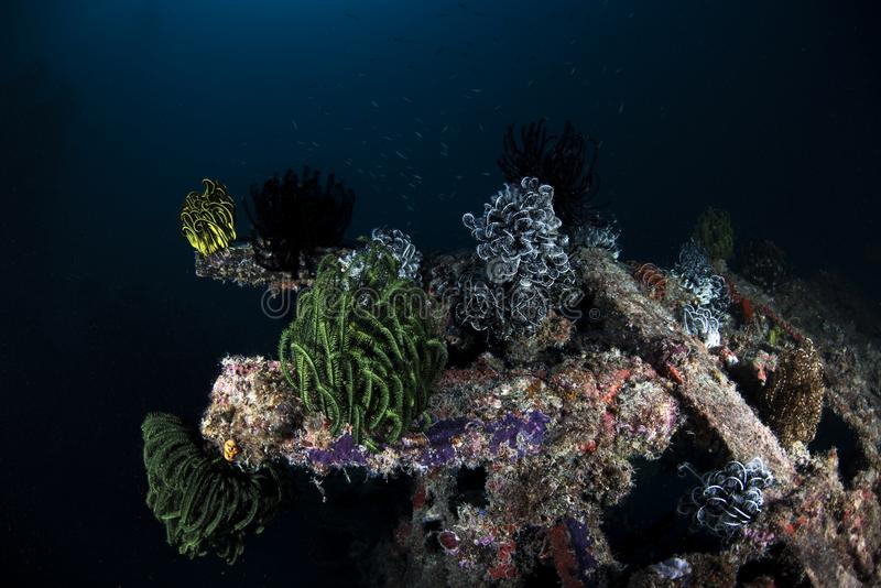 海洋在深蓝背景的生物水下的场面 免版税图库摄影
