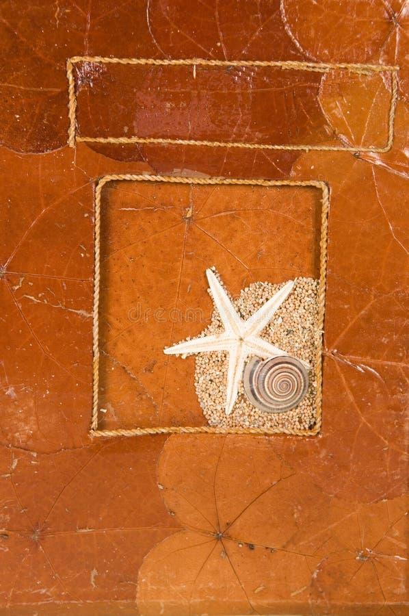 海洋海扇壳的叶子 免版税库存图片