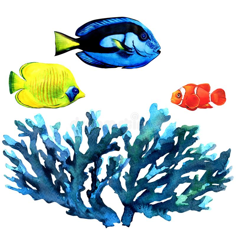 海洋珊瑚礁和鱼,热带海草,珊瑚,在海题材下,套海洋设计的元素,海 向量例证