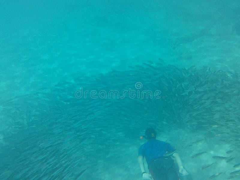 海洋生物在加勒比的水中 免版税图库摄影