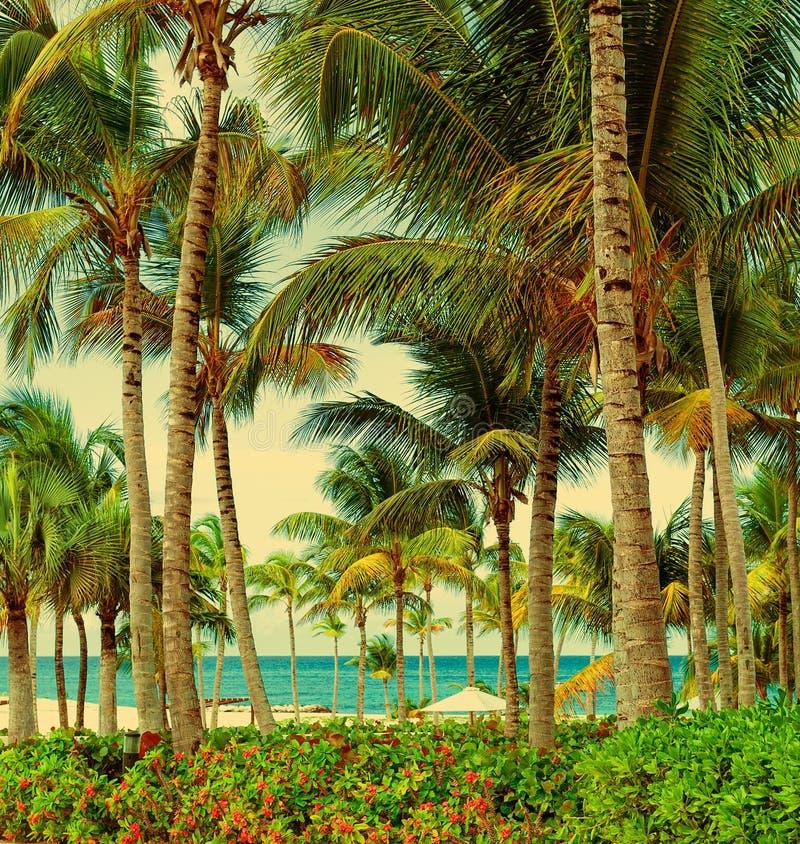 海洋的美丽的景色通过棕榈树 热带绿叶 南国家的其它地方 库存照片