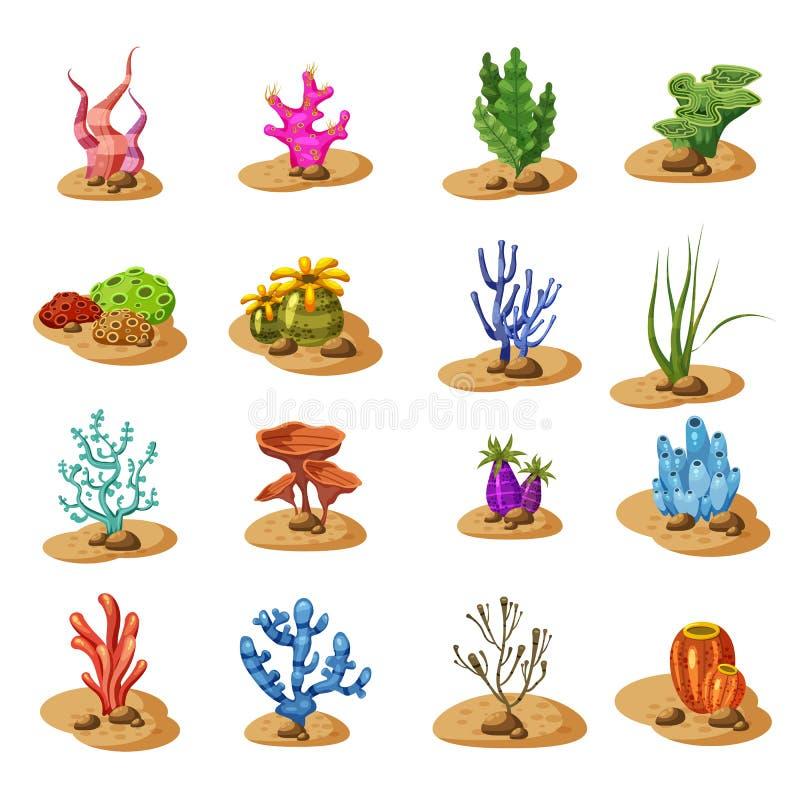 海洋绿藻类海草,种植水中,隔绝在白色背景,传染媒介,动画片样式 向量例证