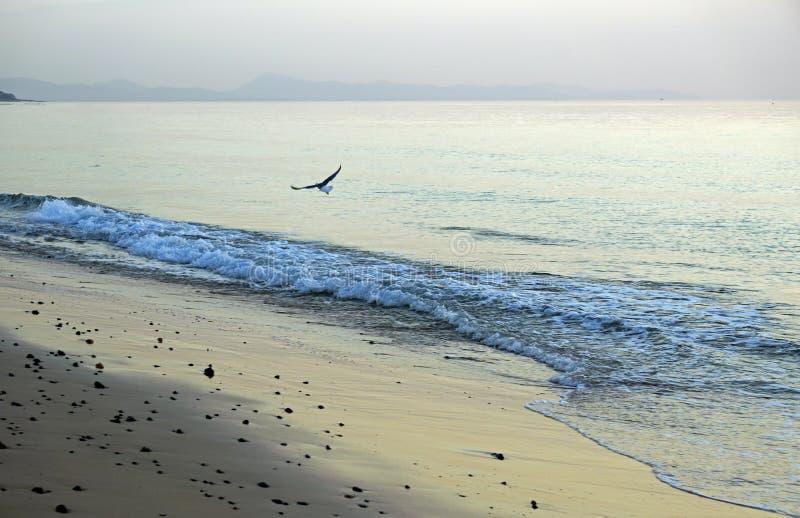 海洋 连续海浪在海滩挥动 清早在日出前的几分钟 免版税图库摄影