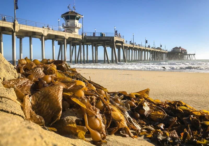 海浪城市、加州海滩和码头沿太平洋 免版税库存照片