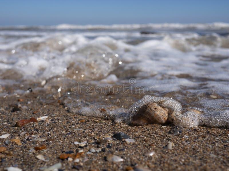 海浪波浪报道的空的rapana壳 库存照片