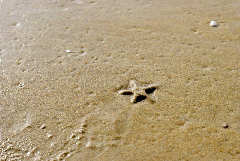 海海星 免版税库存照片