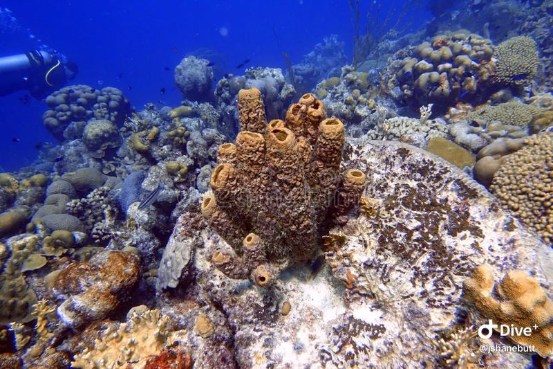 海海绵附有岩石和珊瑚礁在海洋 免版税图库摄影