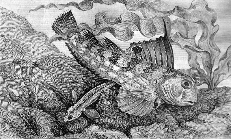 海深度的居民 皇族释放例证