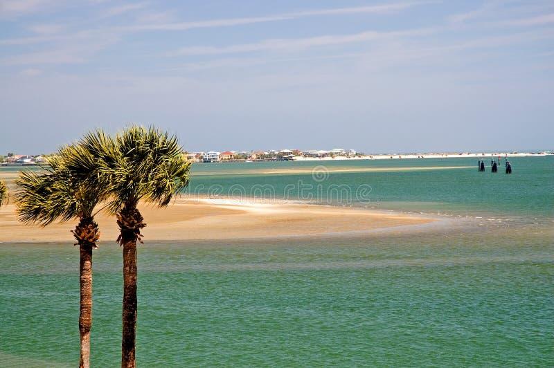 海湾佛罗里达棕榈树 免版税库存图片