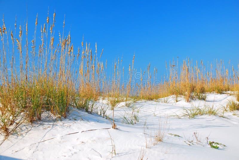 海湾支持白色沙丘 免版税库存图片