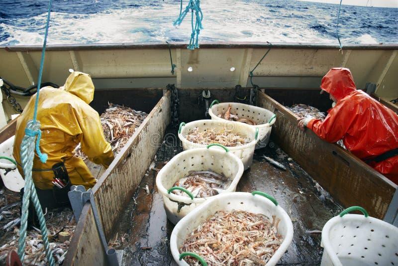 海湾都伯林捕鱼大虾海运 库存图片