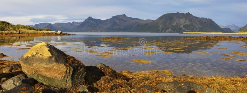 海湾风景全景在Lofoten海岛上的有山峰和反射的在水中 海岛lofoten Lofoten风景, 免版税库存图片