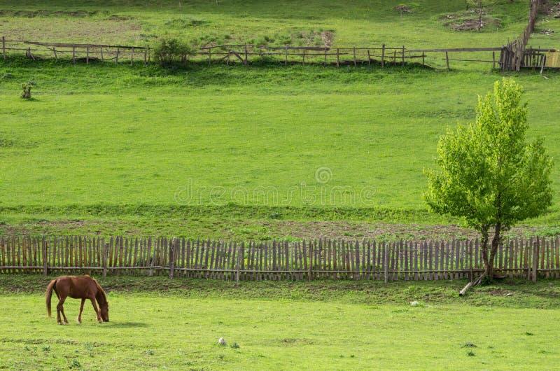 海湾马在山坡的一个被操刀的牧场地吃草 免版税库存照片
