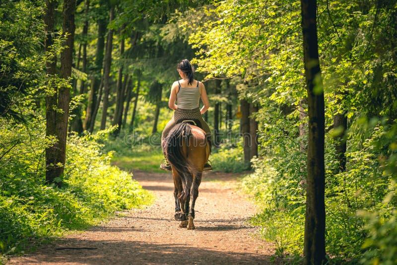 海湾马的年轻车手妇女在日落的秋天公园 十几岁的女孩骑乘马在公园,被射击的形式后边 库存照片