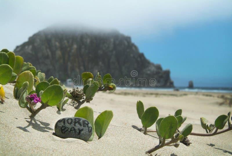 海湾morro岩石 免版税库存图片