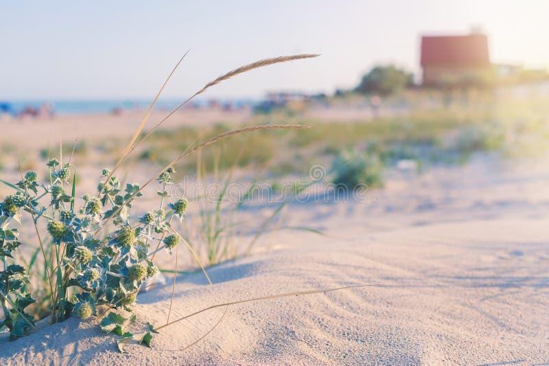 海滨的微小的舒适房子在沙子和仙人掌中 图库摄影