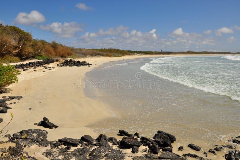 海滩伊莎贝拉海岛,加拉帕戈斯,厄瓜多尔 库存图片