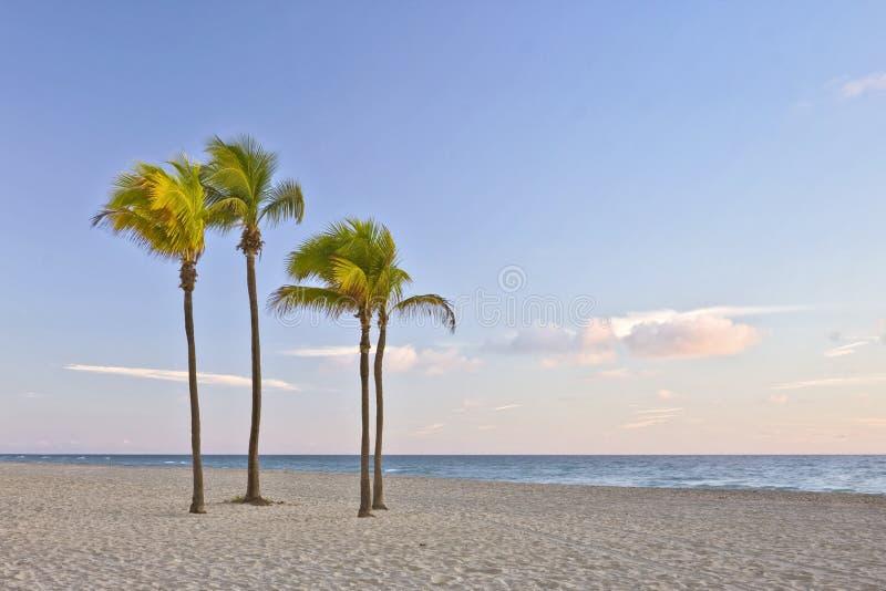 海滩佛罗里达迈阿密热带掌上型计算&# 免版税库存图片