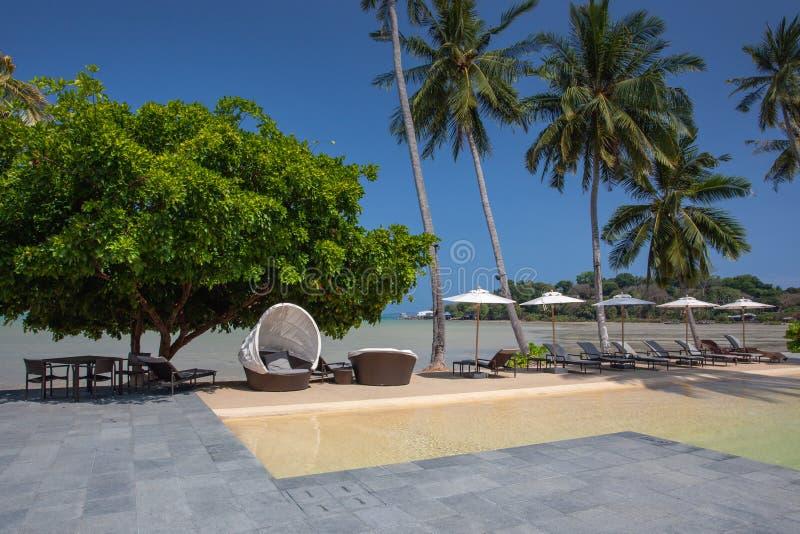 海滩假日,有棕榈树的豪华游泳场 库存照片