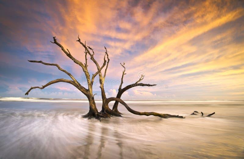 海滩停止的漂流木头愚蠢海洋日落结&# 免版税库存照片
