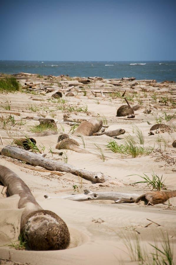 海滩划分为的棕榈树 库存照片