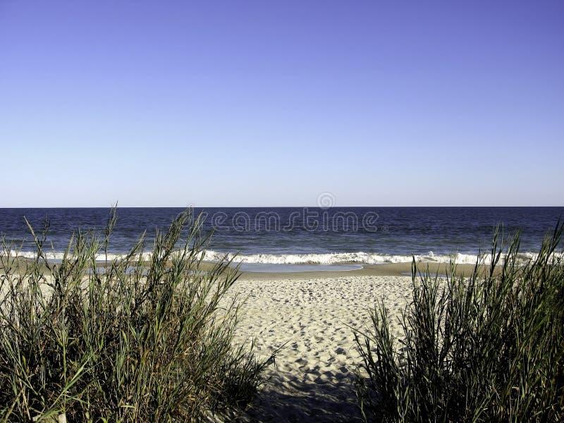 海滩加州桂sc 免版税库存图片