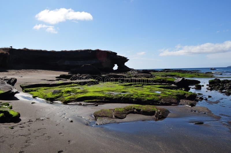 海滩加拉帕戈斯 免版税库存照片