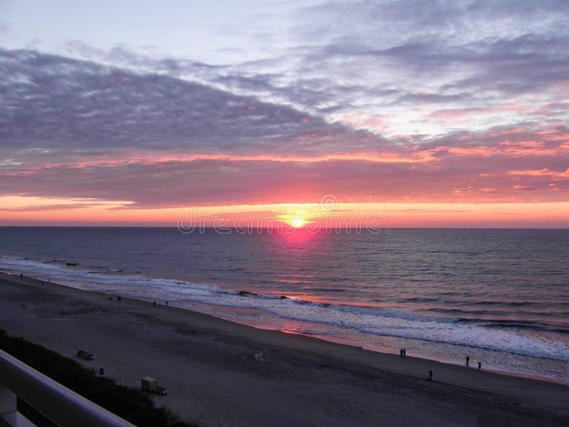 海滩南卡罗来纳州的加州桂 免版税库存图片