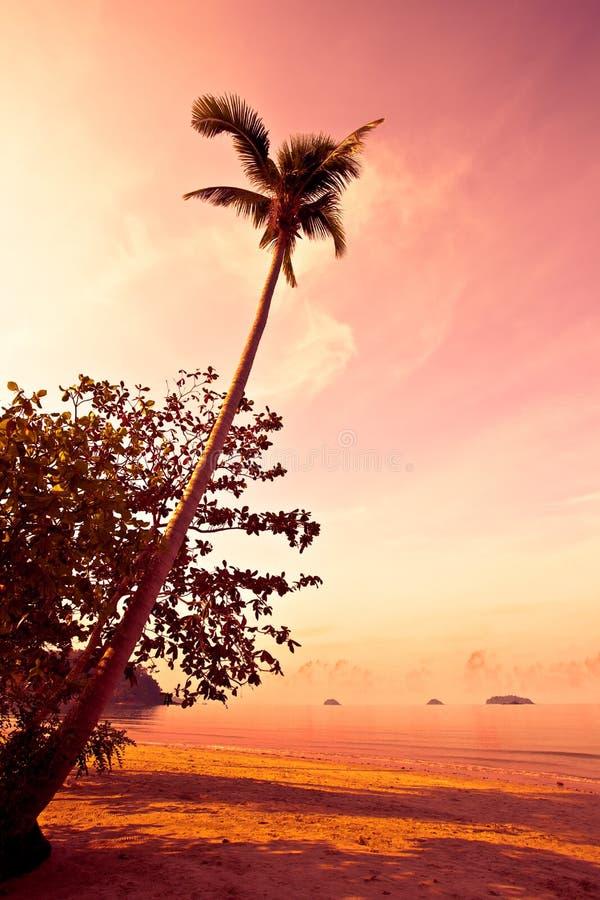 海滩可可椰子沙子日落回归线 免版税图库摄影