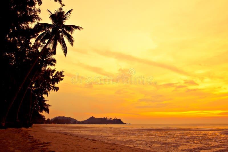 海滩可可椰子沙子日落回归线 免版税库存照片