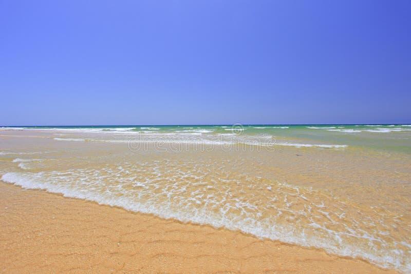 海滩含沙的法鲁 图库摄影