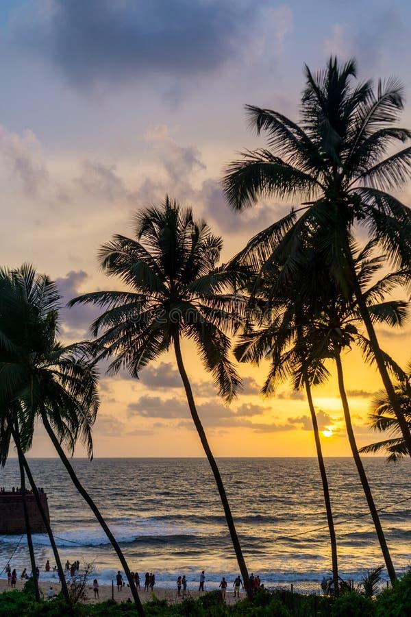 海滩和棕榈树在印度 免版税库存照片