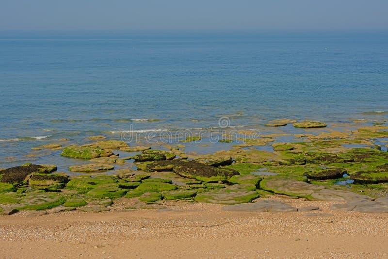 海滩和海草细节与岩石的在法国蛋白石海岸的 库存图片