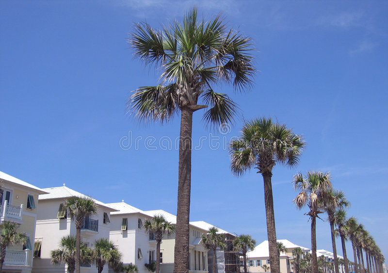 海滩回家棕榈树 图库摄影