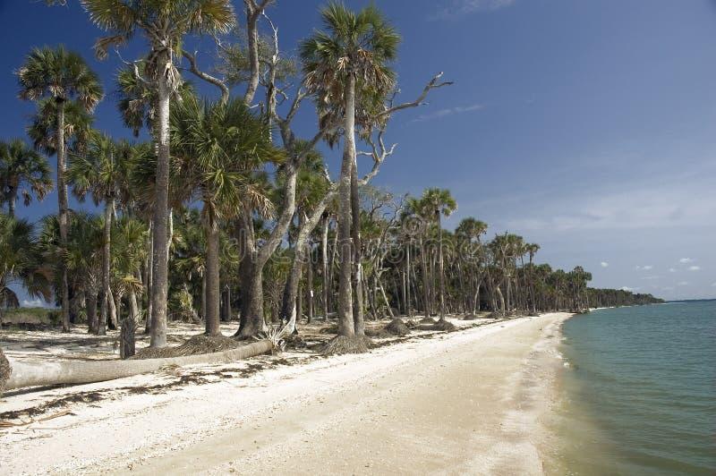 海滩塔希提岛 库存照片