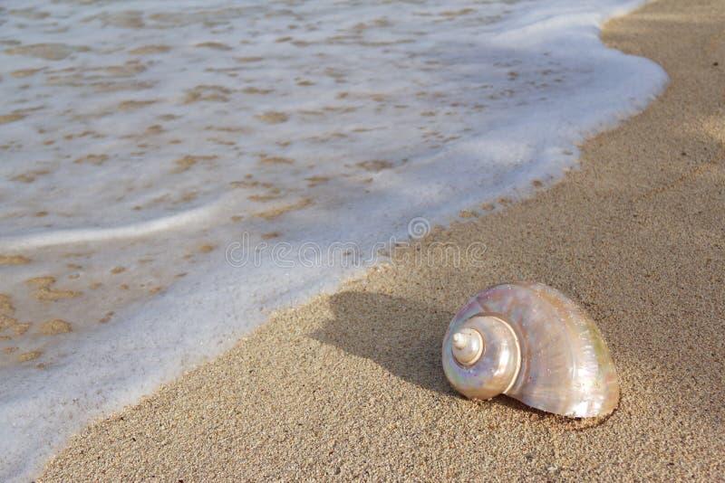 海滩壳蜗牛 免版税库存照片